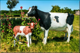 Silent Cows by corngrowth, photography->sculpture gallery