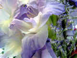 Heavenliness! by marilynjane, Photography->Flowers gallery