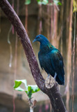Some Days I Need to Focus Better by Pistos, photography->birds gallery