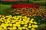 Keukenhof 19 by corngrowth, photography->flowers gallery
