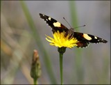 Butterfly by LynEve, photography->butterflies gallery