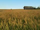 Bountiful Harvest by mayne, Photography->Landscape gallery