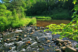 Summer on Nine Mile Creek by Silvanus, photography->landscape gallery