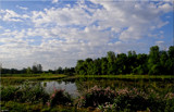 A Lovely Summer Day by tigger3, photography->landscape gallery