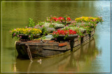 Floating Flowers by corngrowth, photography->flowers gallery