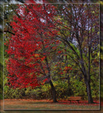 Red Tree At Wildwood by Jimbobedsel, photography->landscape gallery