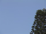 plain blue sky with tree by skyblue, photography->skies gallery