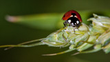 Red by zunazet, photography->insects/spiders gallery