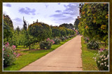 Orchard Path by corngrowth, Photography->Landscape gallery