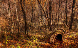 Pull Up A Log by 0930_23, photography->landscape gallery