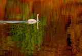 lost in reflections by solita17, Photography->Birds gallery