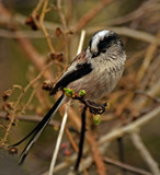 Bundle of fluff by biffobear, photography->birds gallery