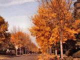 Autumn Street Scene by verenabloo, Photography->Landscape gallery