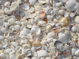 beach shells by itzfritz, Photography->Textures gallery