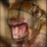 Black Pine Animal Sanctuary _ Hannah by tigger3, photography->animals gallery