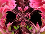 Indian Paintbrush by d_spin_9, Photography->Manipulation gallery