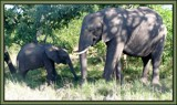 Mother and Child by SusanVenter, Photography->Animals gallery