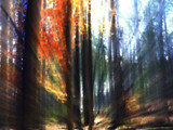 Forest Of Colored Lights by bfrank, photography->manipulation gallery