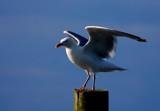 evening sunlight by solita17, Photography->Birds gallery