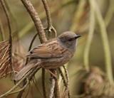 I'm In love by biffobear, photography->birds gallery
