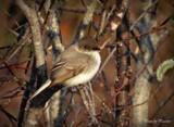 Bird. by picardroe, photography->birds gallery
