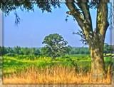 Farmscape by ccmerino, photography->landscape gallery