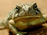 Are you talking to me?!? by onespock, Photography->Reptiles/amphibians gallery