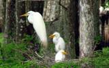 Nesting  43 by 100k_xle, Photography->Birds gallery