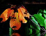The Autumn leaves by biffobear, photography->nature gallery