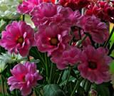 Flowers by the window 5 by biffobear, photography->flowers gallery