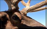 Seeing Eye To Eye by Jimbobedsel, Photography->Animals gallery