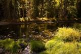 Summer Stream by Wayne_Dwopp, Photography->Water gallery