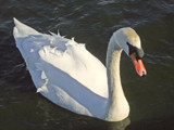 Slightly Ruffled by braces, Photography->Birds gallery