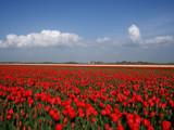 Everywhere you look by Paul_Gerritsen, Photography->Flowers gallery