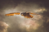 Swoop.. by biffobear, photography->manipulation gallery