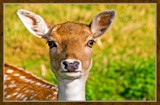 Deer Friends (3 of 3) by corngrowth, photography->animals gallery