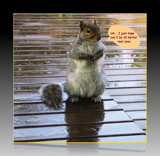 A Critter Card for Susanne by mesmerized, photography->manipulation gallery