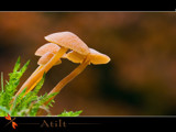 atilt by kodo34, Photography->Mushrooms gallery