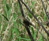 Finch? by GomekFlorida, photography->birds gallery