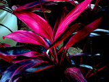 Tropical Plant by dogluver15, Photography->Nature gallery
