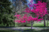 Dogwood Spring Light 1 by chris_f2005, photography->landscape gallery