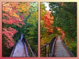 Fall Colours In Northern Ontario #4 by icedancer, photography->landscape gallery