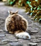 Shy by JaiJoli, photography->pets gallery
