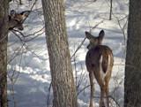 Psssssssst..... by WENPEDER, photography->animals gallery