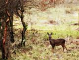 Oh Dear by biffobear, photography->animals gallery
