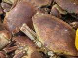 Fresh crab for tea! by owldgirl, photography->general gallery