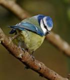 I've got my beady eye on you by biffobear, photography->birds gallery