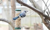 It's All About The Nuts #3 by tigger3, photography->birds gallery