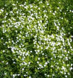 Image: Spring carpet