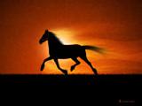 The Running Horse by vladstudio, Illustrations->Digital gallery